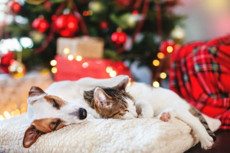 valpen og kattungens første jul