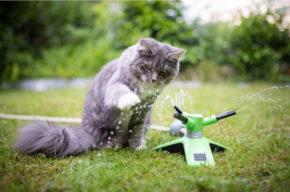 Ta vare på katten i sommer