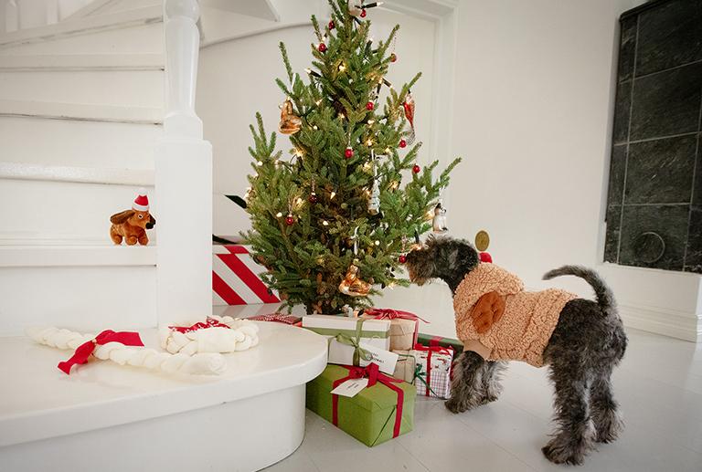 Fyll til julesokken til din hund eller katt