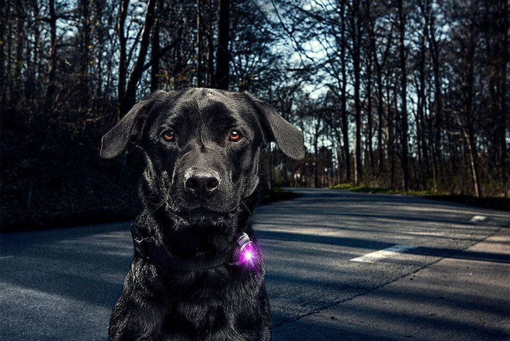 Hundelamper